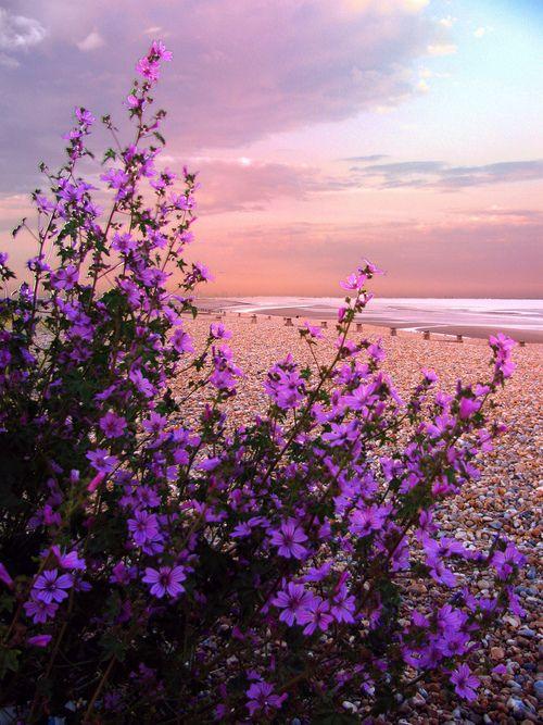 Coastal flowers a breath of fresh air pinterest coastal flowers mightylinksfo
