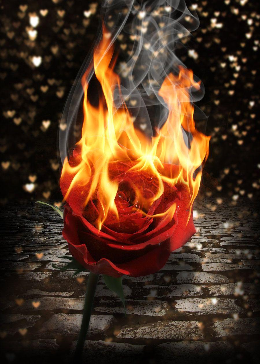 картинки огня красивого восемь лет смог