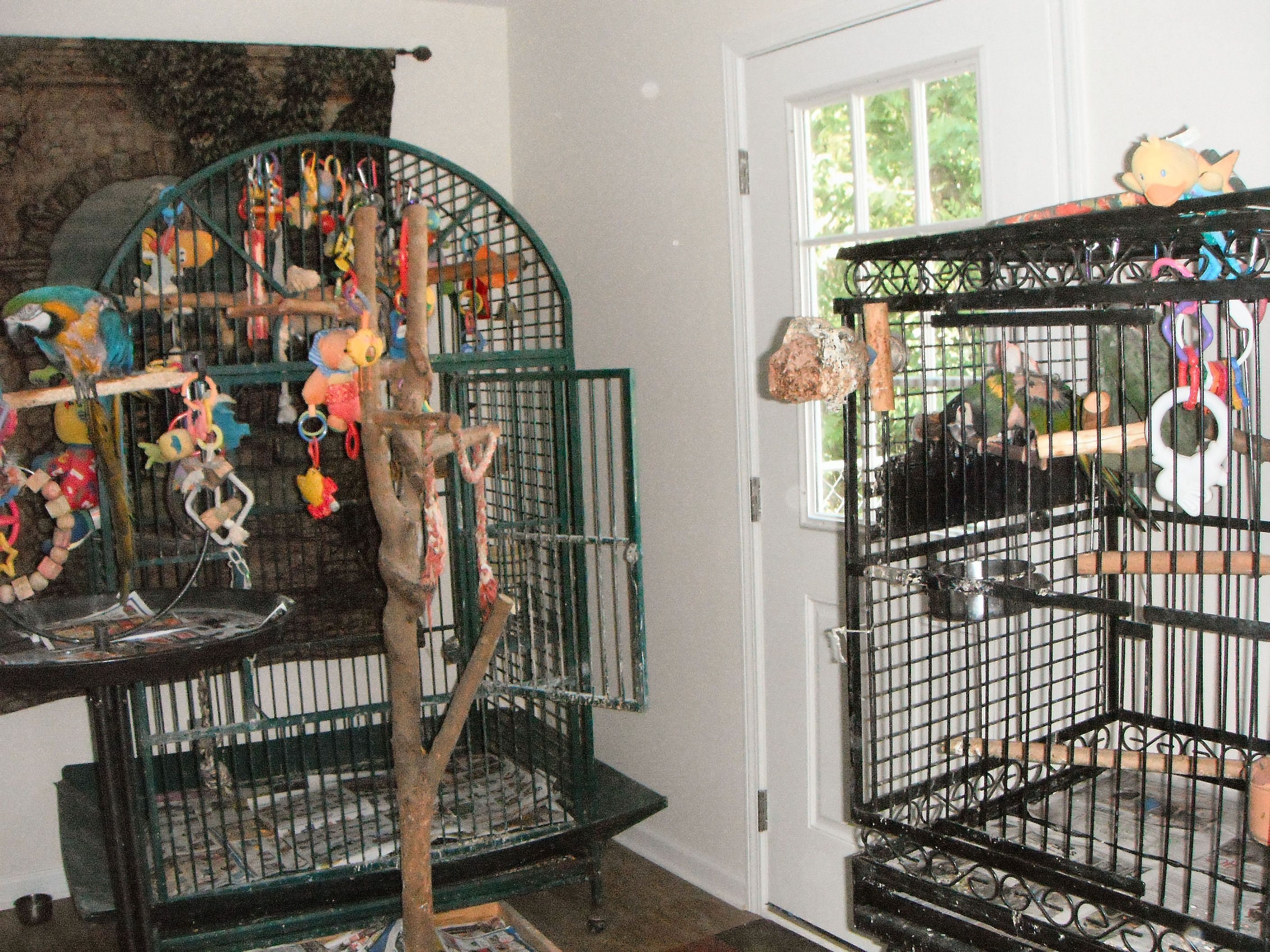 my birdroom!..we have total of 4 birds.Messy room but that's the normal! Love my birds!