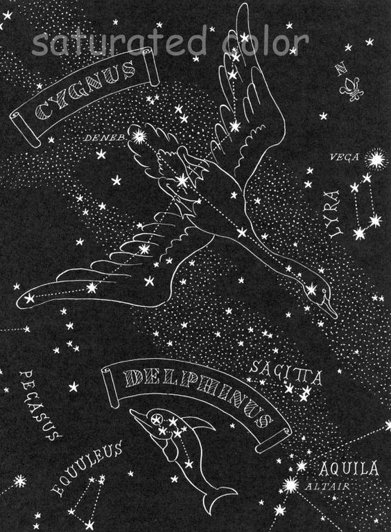 1948 Cygnus the Swan - Delphinus the Dolphin Night Sky Star Chart Map -  Northern Stars Constellations from Astronomy Textbook | Night, Tables and  Vintage