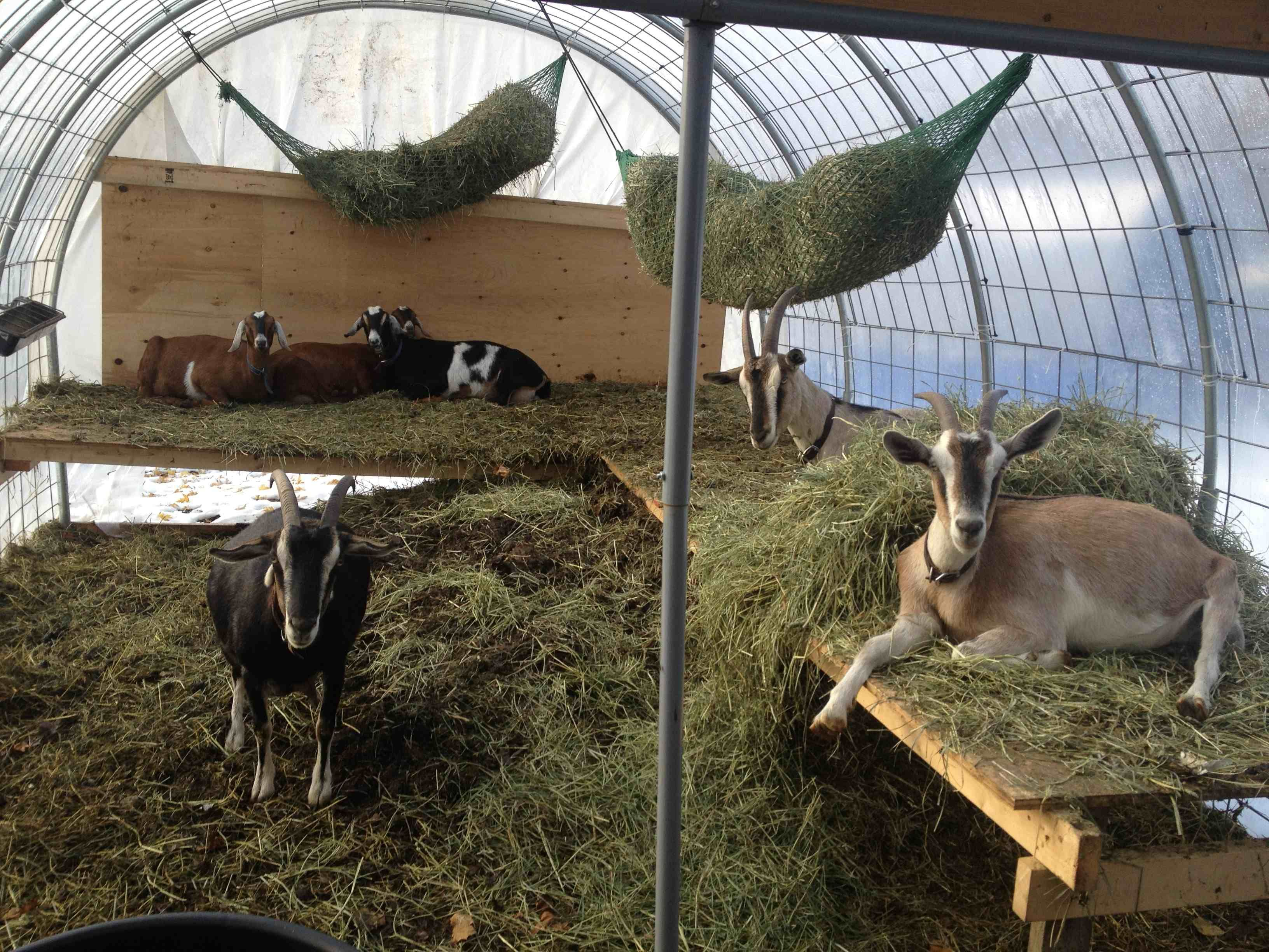 page for round bale feeders goats htm hay feeder img