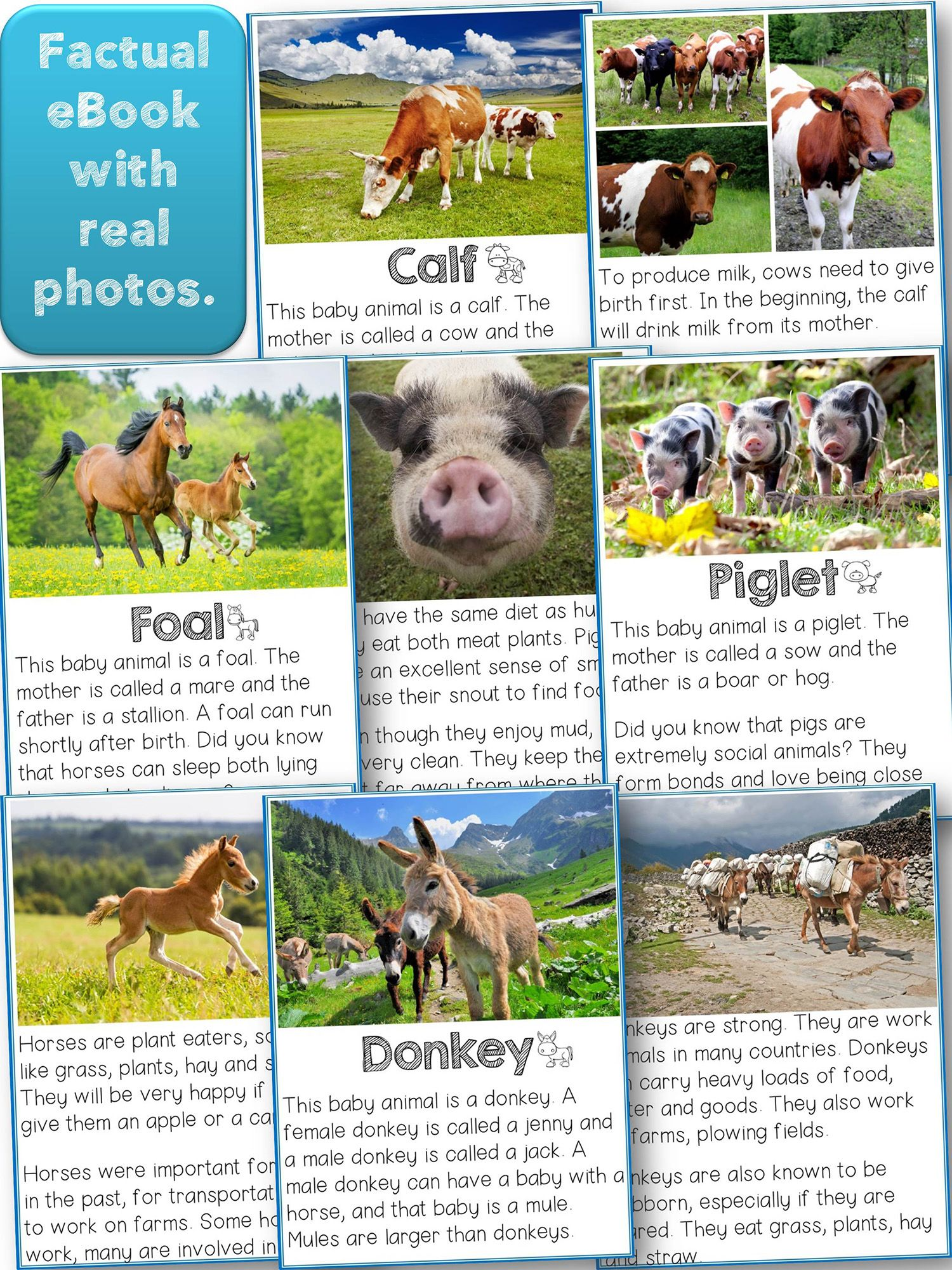Reader farm animals babies nonfiction with real photos malimo this reader is an ebook about farm animals babies and their parents the text is factual to the point and easy to read each animal has two pages with fandeluxe Images