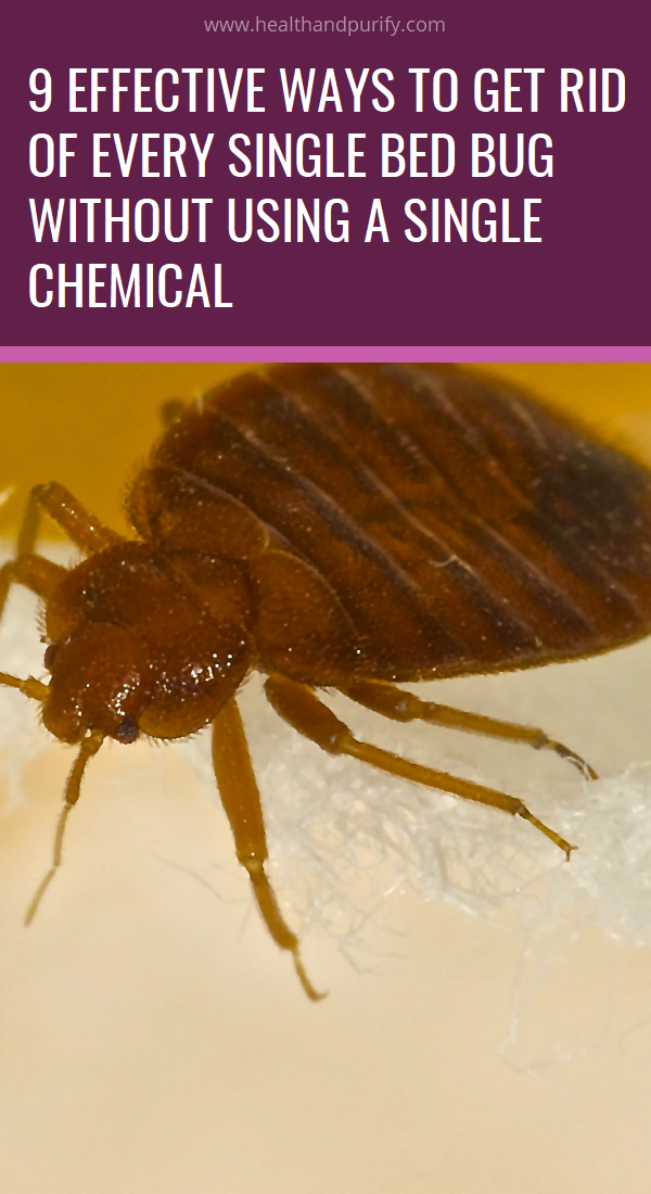 9 Effective Ways to Get Rid of Every Single Bed Bug