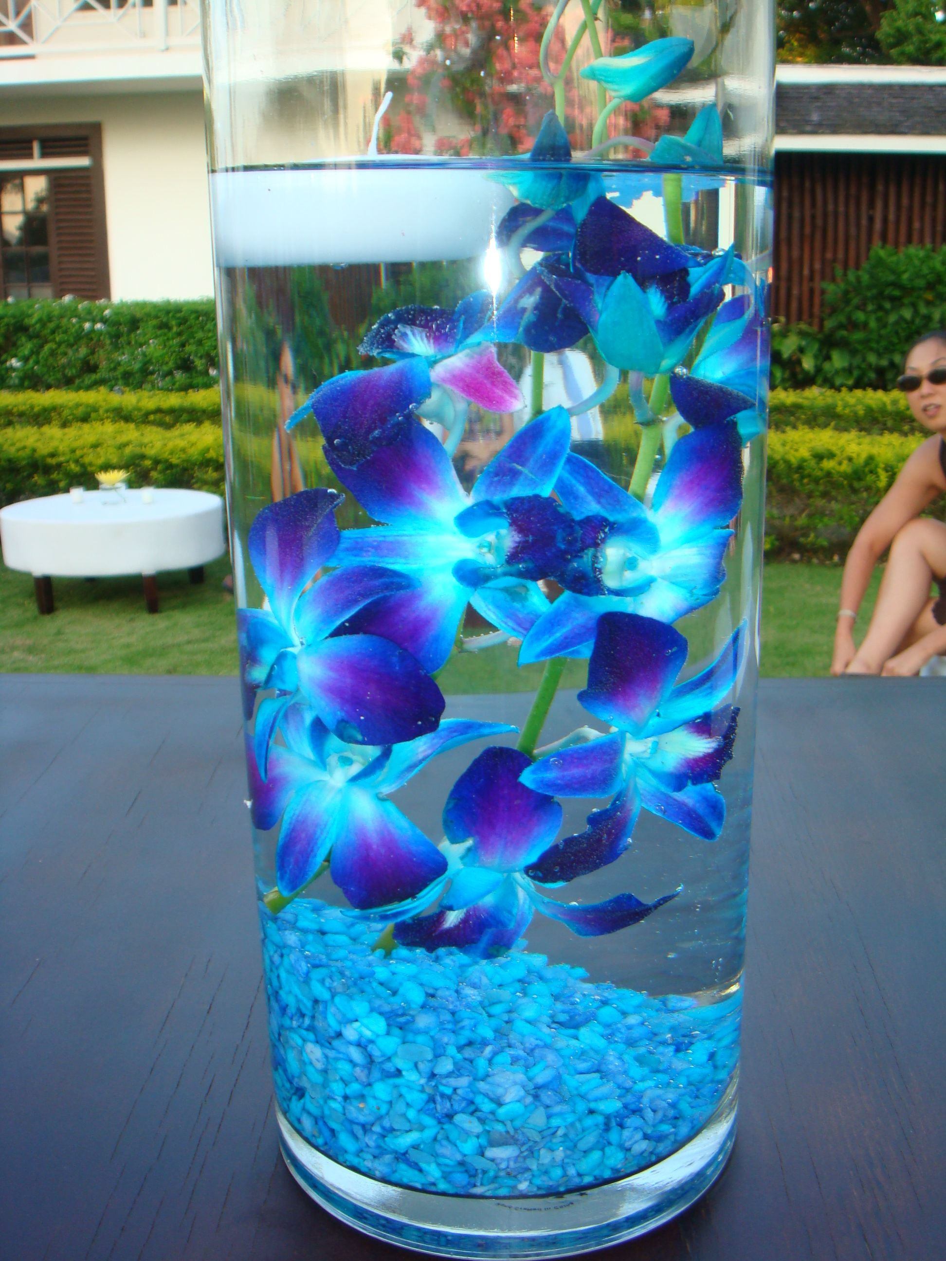Blue dendrobium orchids submerged in water designed by