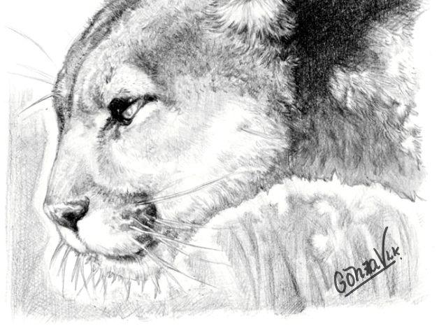 Puma, ilustración de lápiz de GonzaVLK.