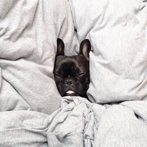 Sleepyhead French Bulldog Puppy Cute Animals Baby Animals