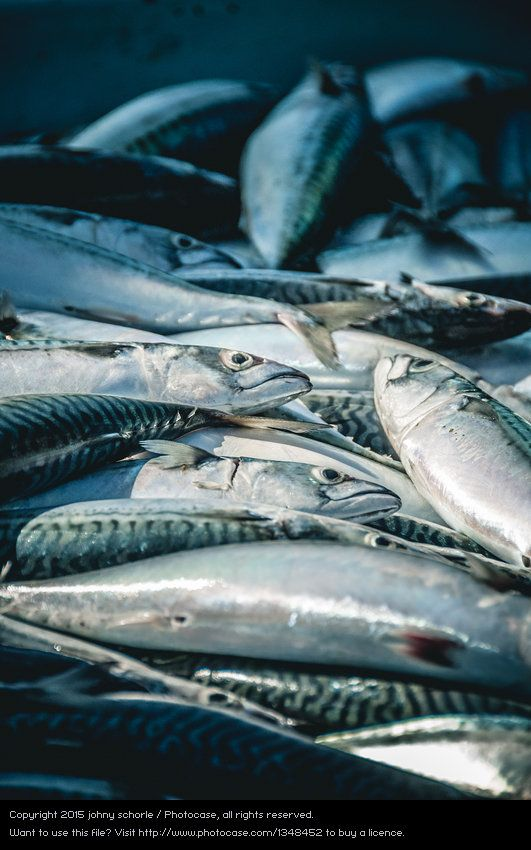 Fischers Fritze Fischt Frische Fische
