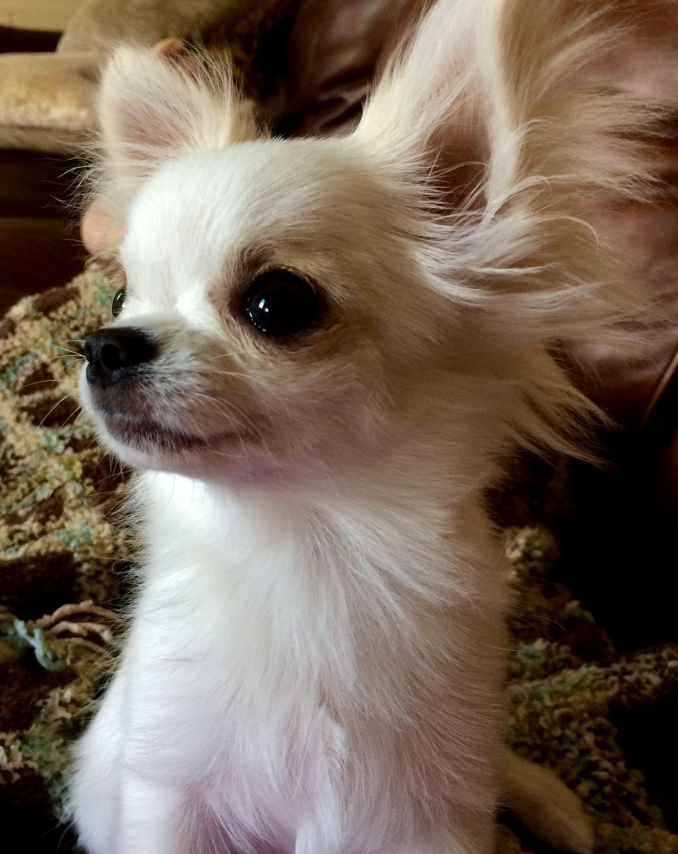Pin von LilaLotta auf Hunde Dogs Lover in 2020