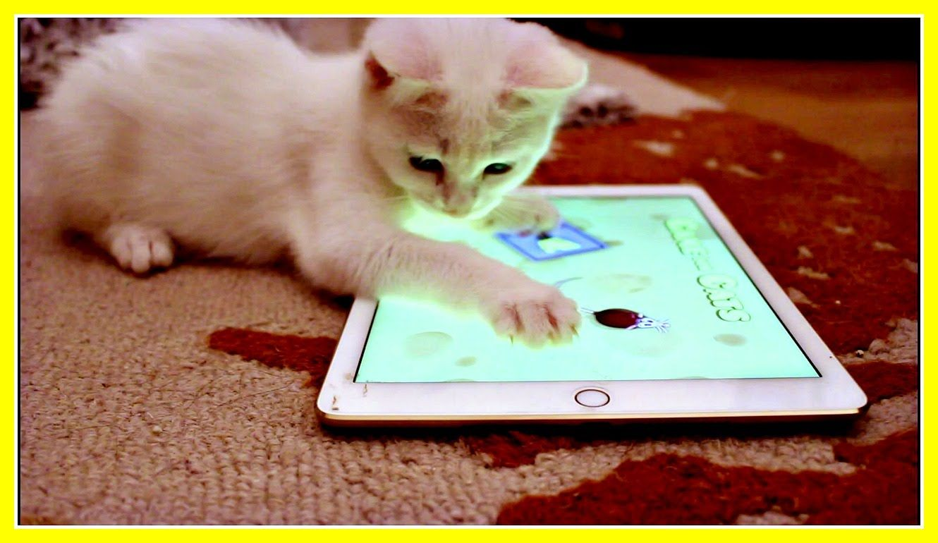 Mimi The Cat Cute Kitten Loves Playing With An Ipad Cat Game Kittens Cutest Kitten Love Kitty Games