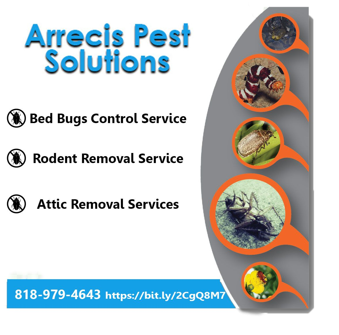Bed Bugs Control Companies In Van Nuys Ca Bed Bugs Bed Bug Control Rodent Removal
