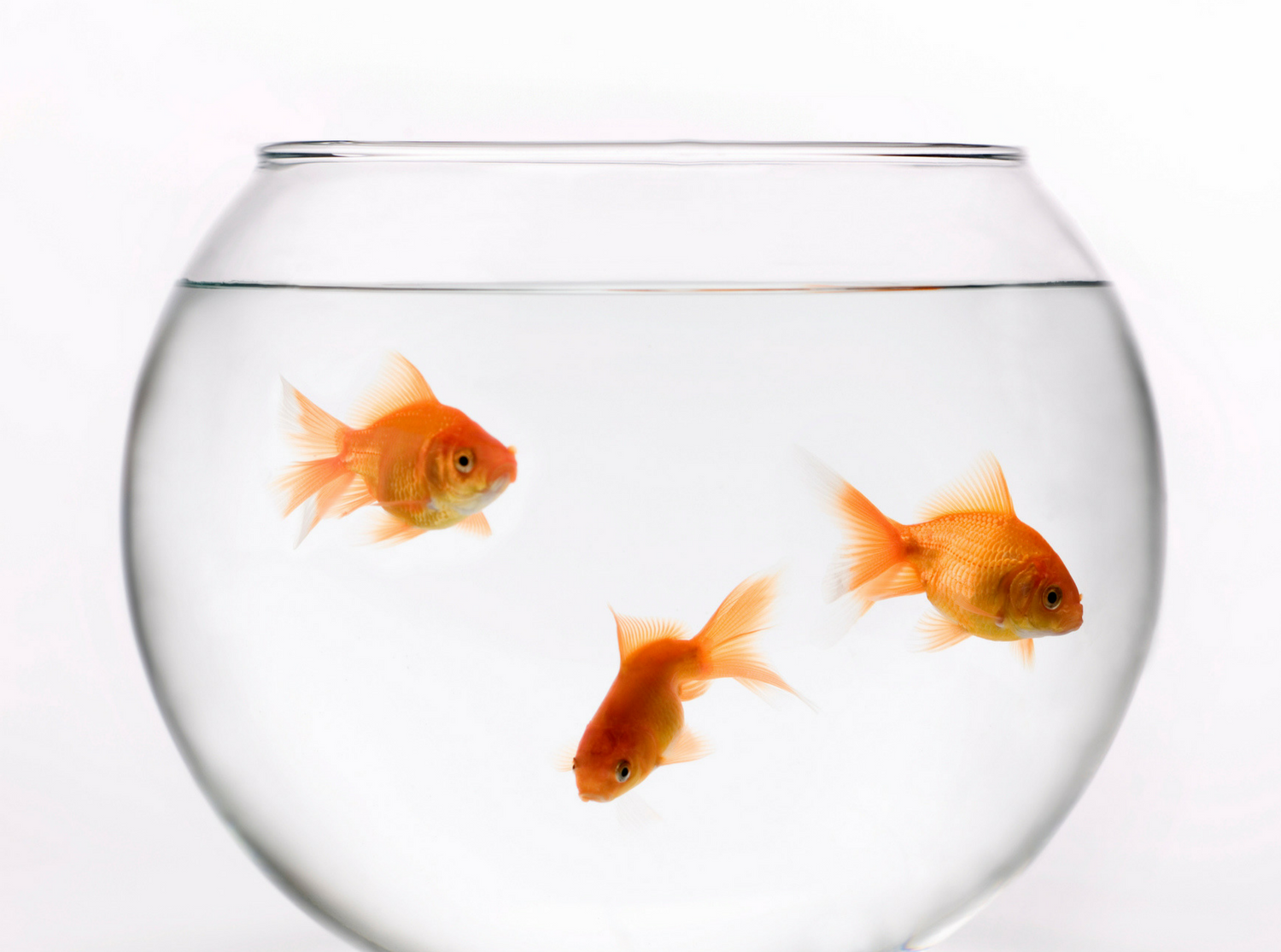 Totally Normal Activities That Are Illegal in Certain Places | Feng shui,  Goldfish, Goldfish bowl