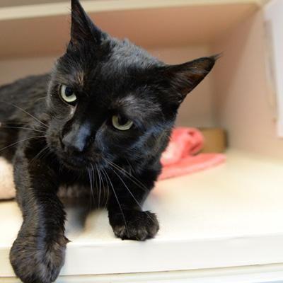 Jack Maxfund Animal Adoption Center Denver Co With Images Cat Adoption Pet Adoption Center Pet Adoption