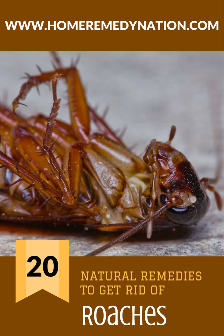 Home remedies for roaches kill them fast u naturally home remedy