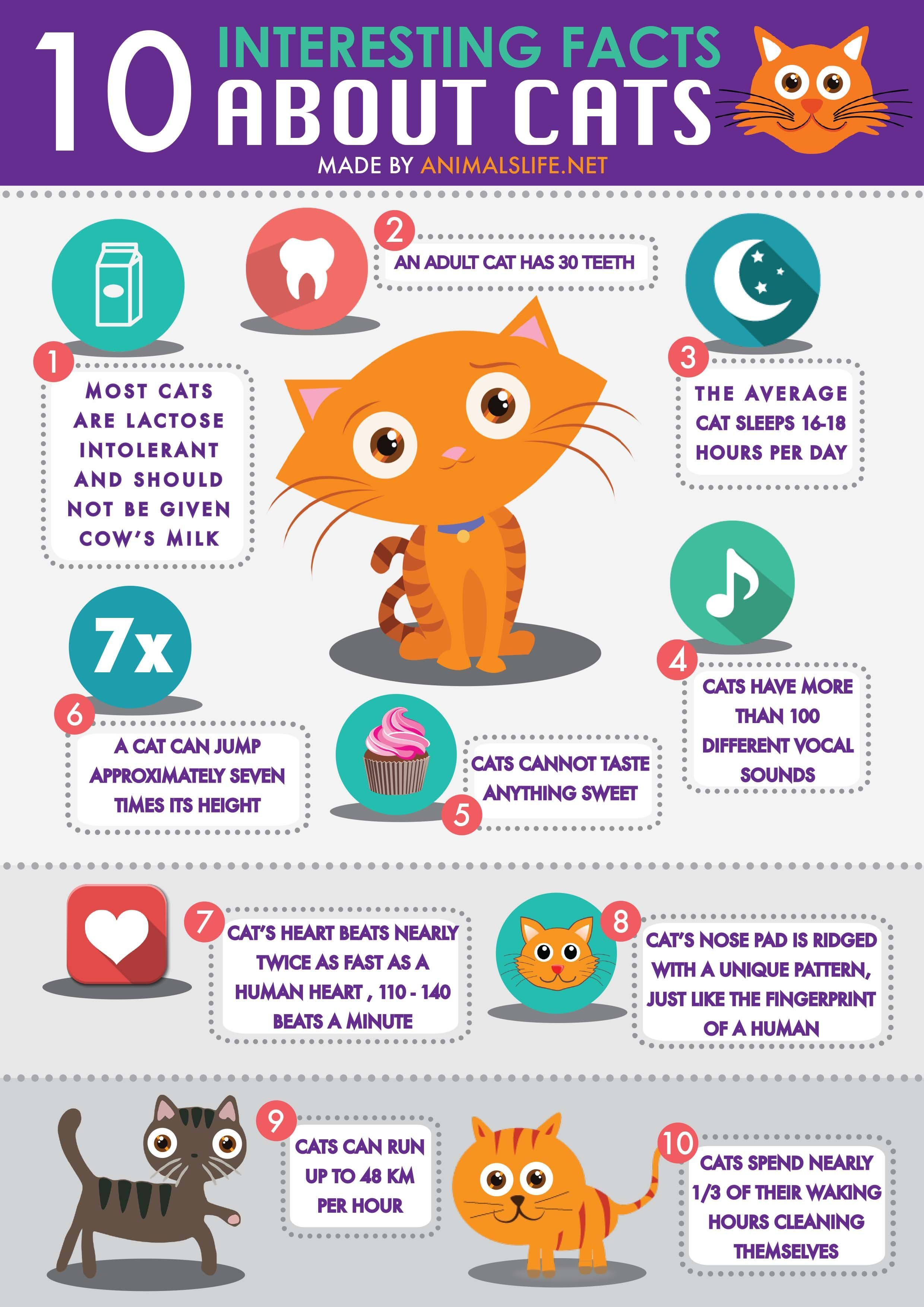 Pin By Tammy Williamson On Pets Animals In 2020 Cat Facts Fun Facts Kitten Care