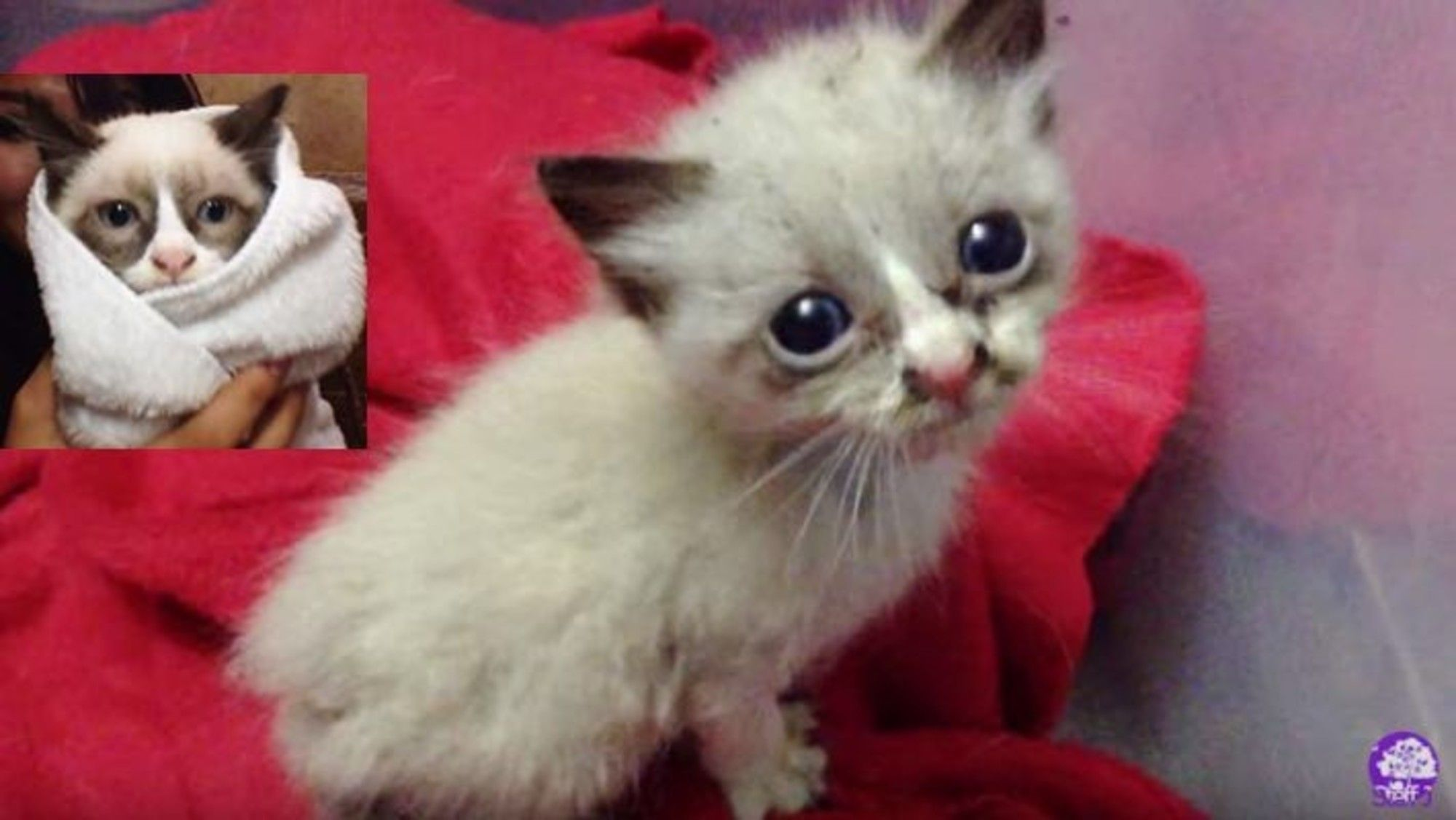 A tiny kitten was wandering outside on the street meowing