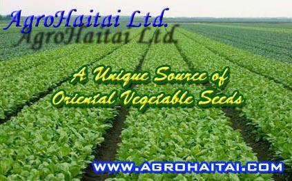 Oriental Asian Vegetable Seeds Agrohaitai Ltd Ontario Canada