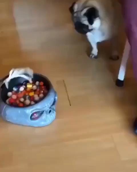 Photo of Dog is afraid