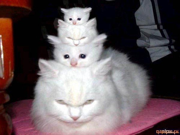 A Stack Of Kitties This Is So Cute And Adorable Love It The Incensewoman Crazy Cats Kittens Cutest Cats