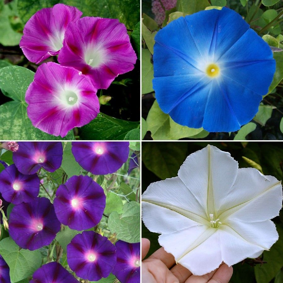 Found on Google from Flower seeds