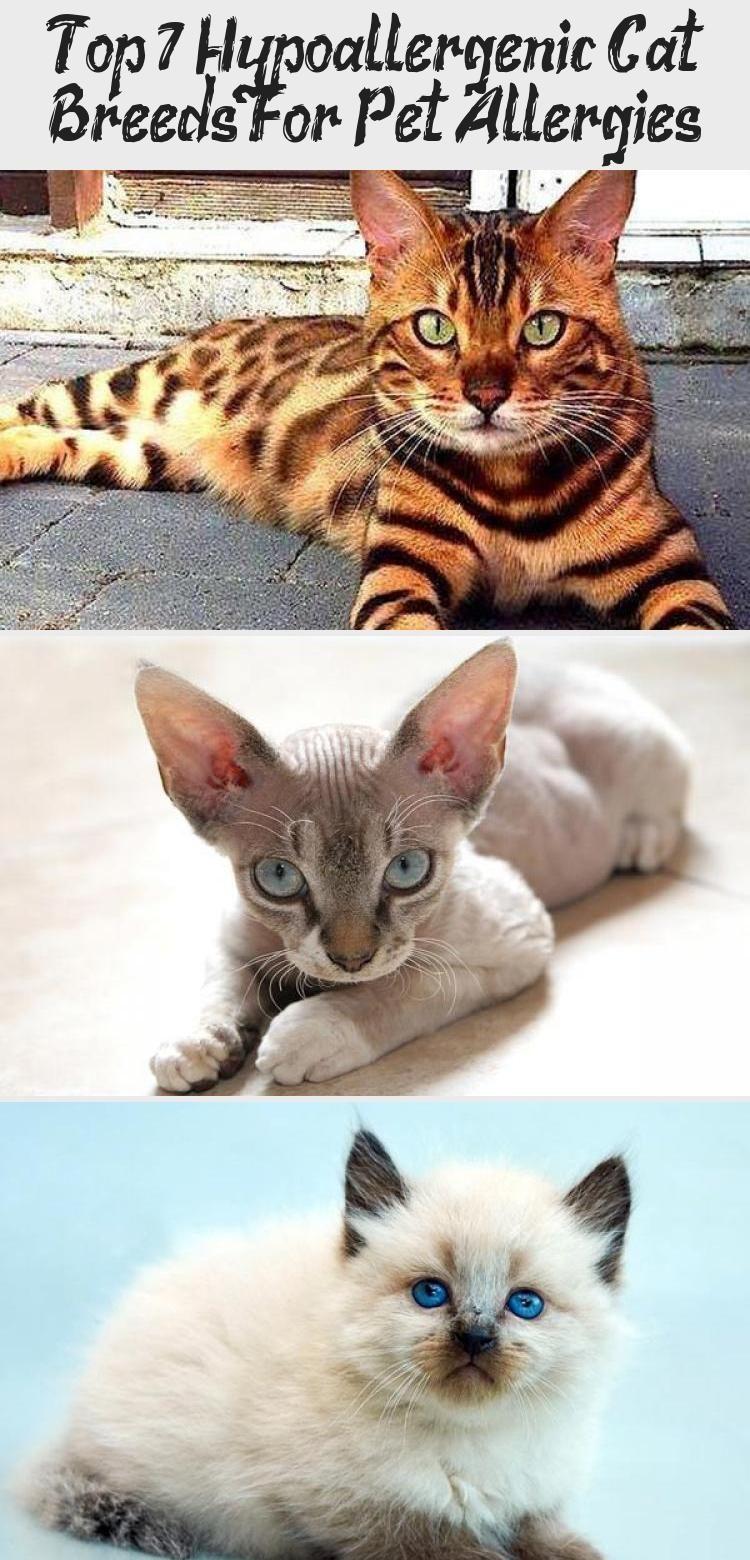 My Blog En Blog in 2020 Cat breeds, Cat allergies
