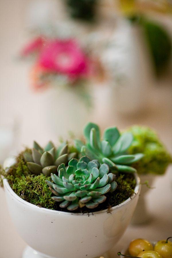 succulent centerpiece  for more ideas, visit oregonsucculent.com  Succulent Rentals, Gifts & Favors