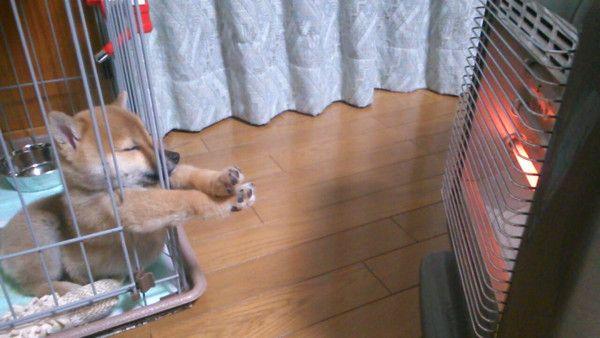 給我暖氣 柴柴伸手想取暖 瞇瞇眼畫面超治癒 Ettoday 東森新聞雲 おかしな動物 犬の写真 ワンコ