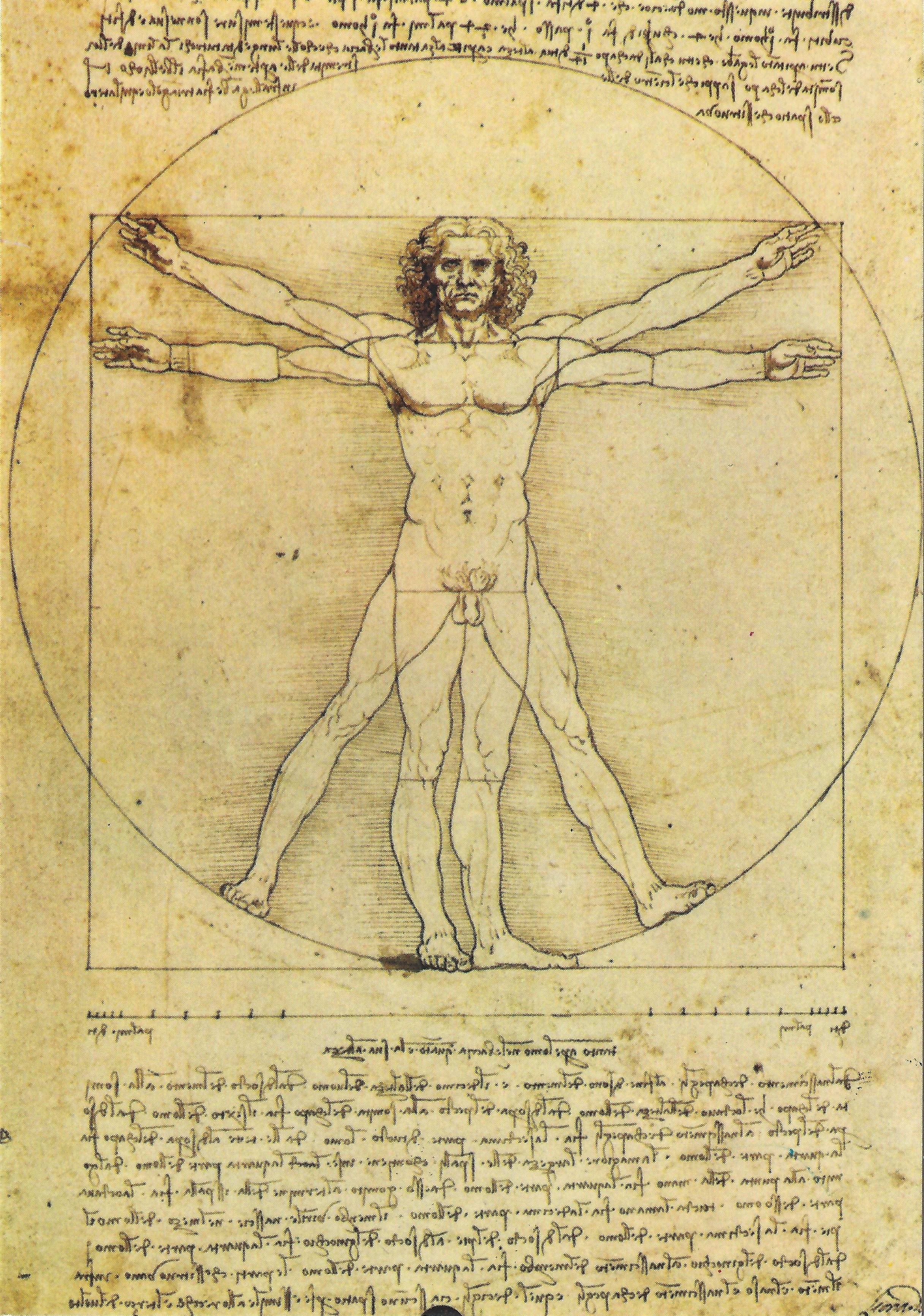 Leonardo Da Vinci: disegno di anatomia umana, secondo proporzioni ideali.