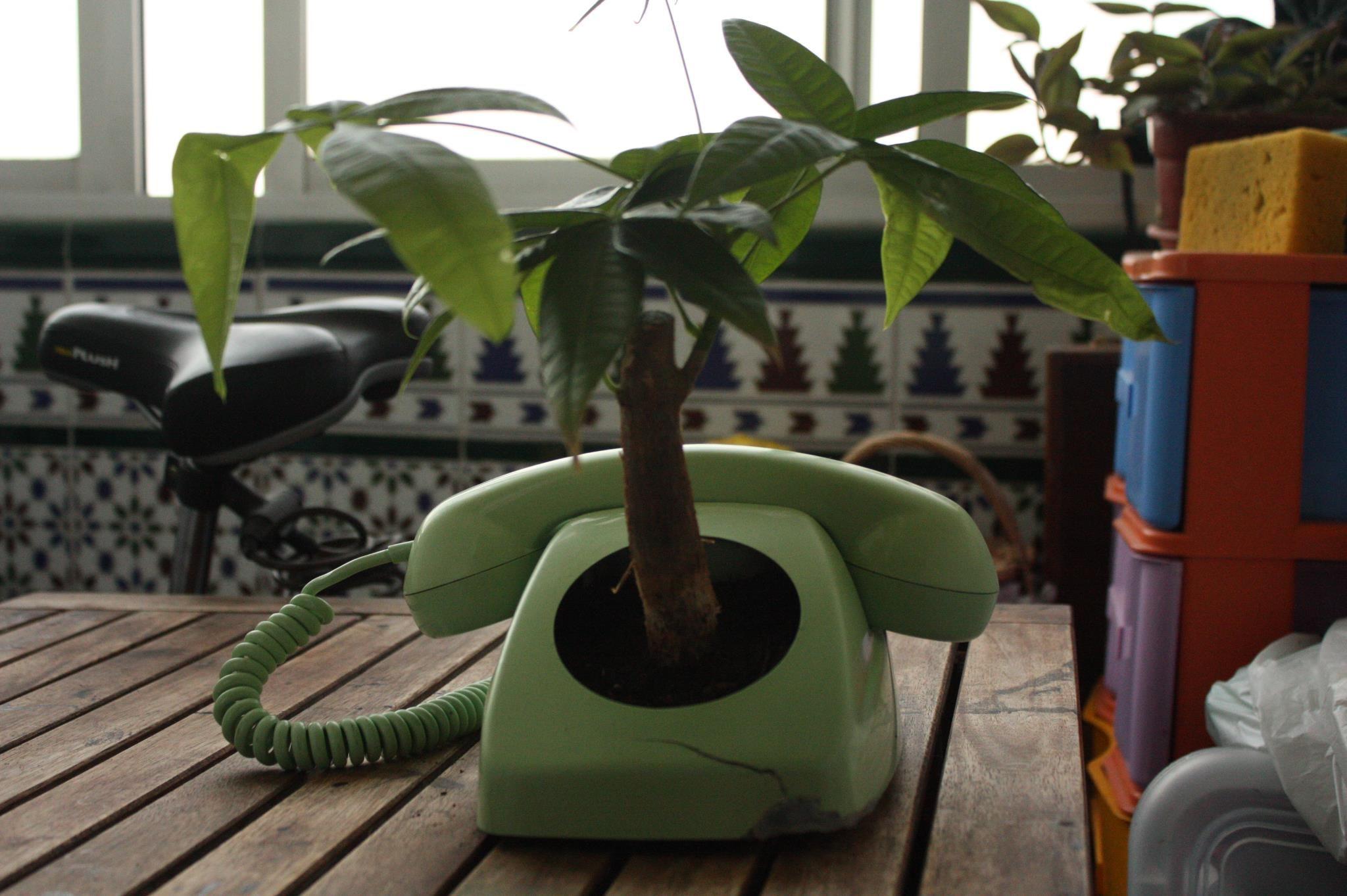 Teléfono maceta