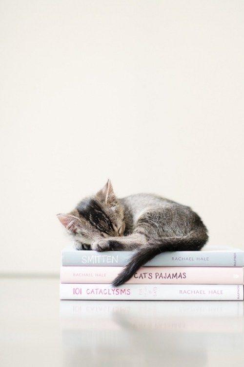 One Can Never Own Too Many Books Animais Bonitos Gatinhos