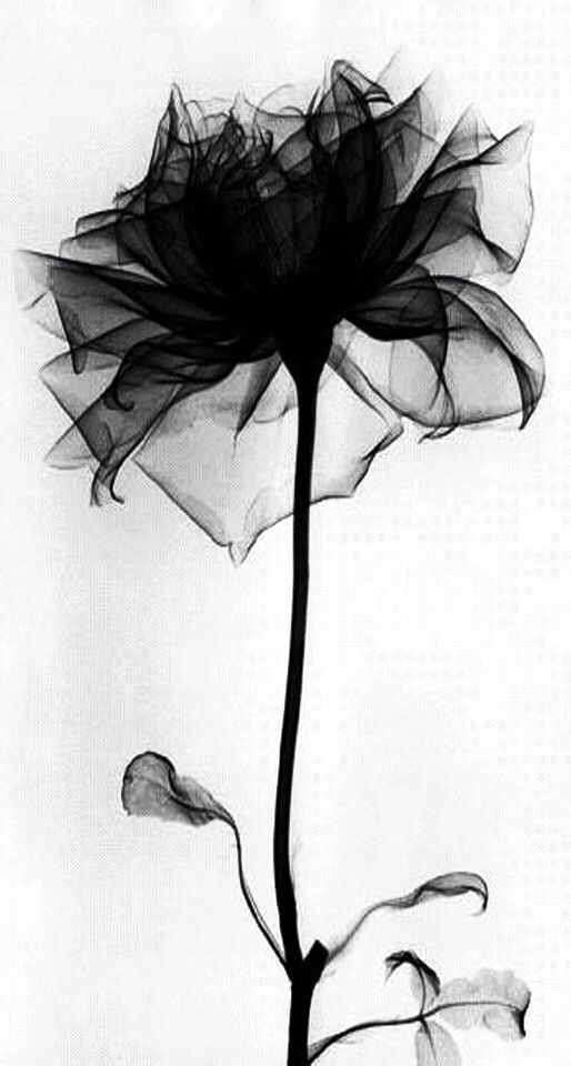 X Ray Flower Tattoo On The Left Inner Arm Tattoo Artist: Black Rose Tattoos, Xray Flower, Black Tattoos