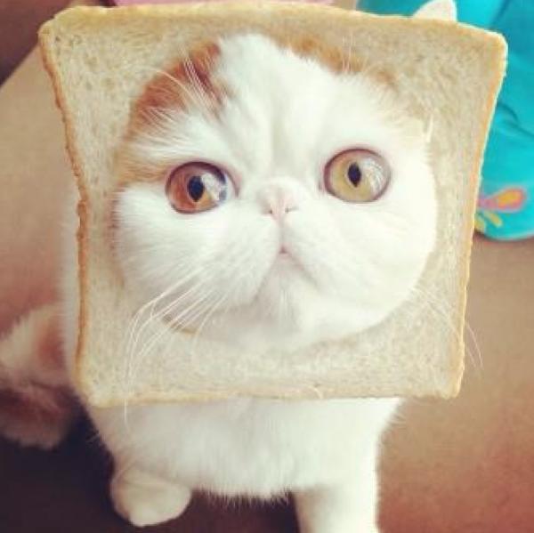 Tartine de chat