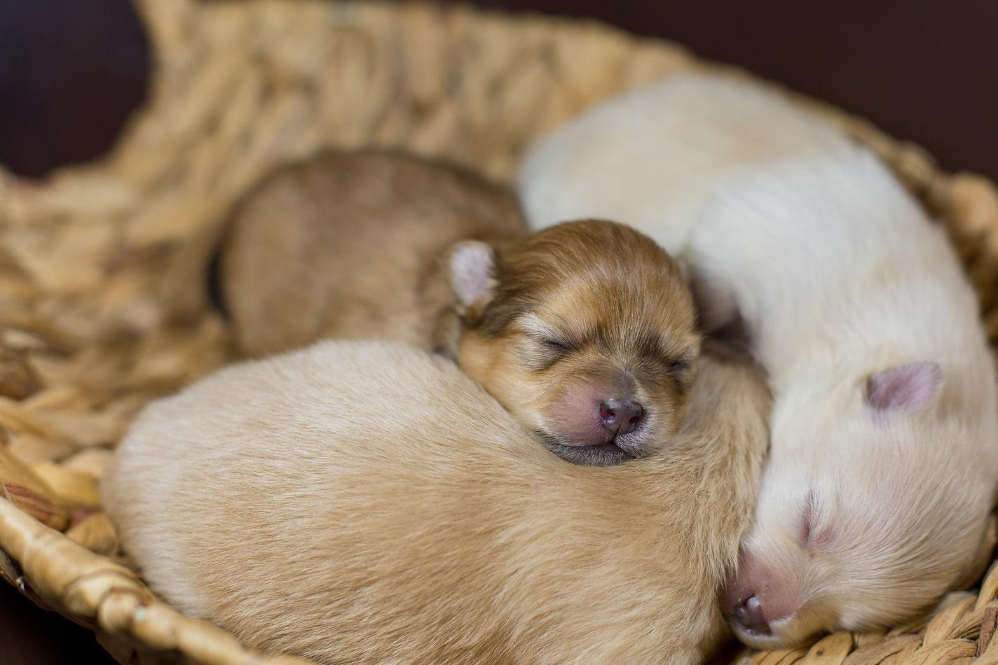 Puppies Google Search Newborn Puppies Newborn Puppy Care Sleeping Puppies