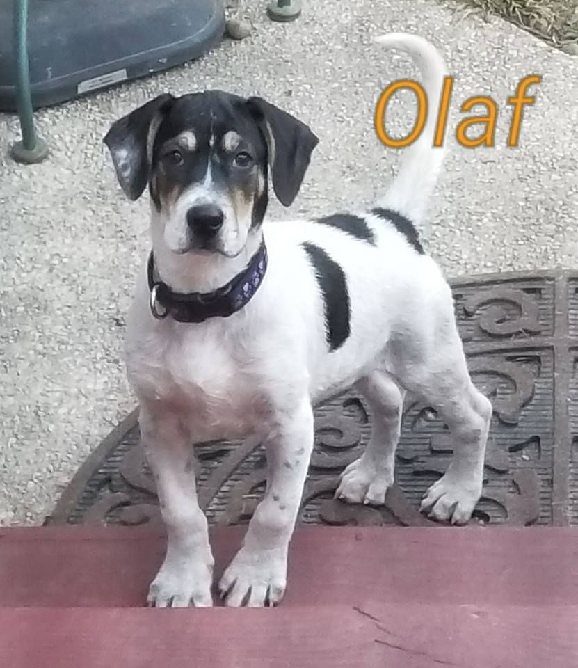 Labbe Dog For Adoption In Toms River Nj Adn 675323 On Puppyfinder Com Gender Male Age Baby