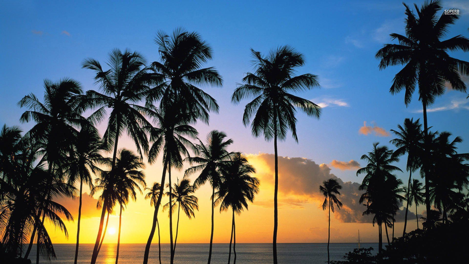 8 Reasons We Need Spring Break Now California Palm Trees Palm Tree Sunset Palm Trees Wallpaper