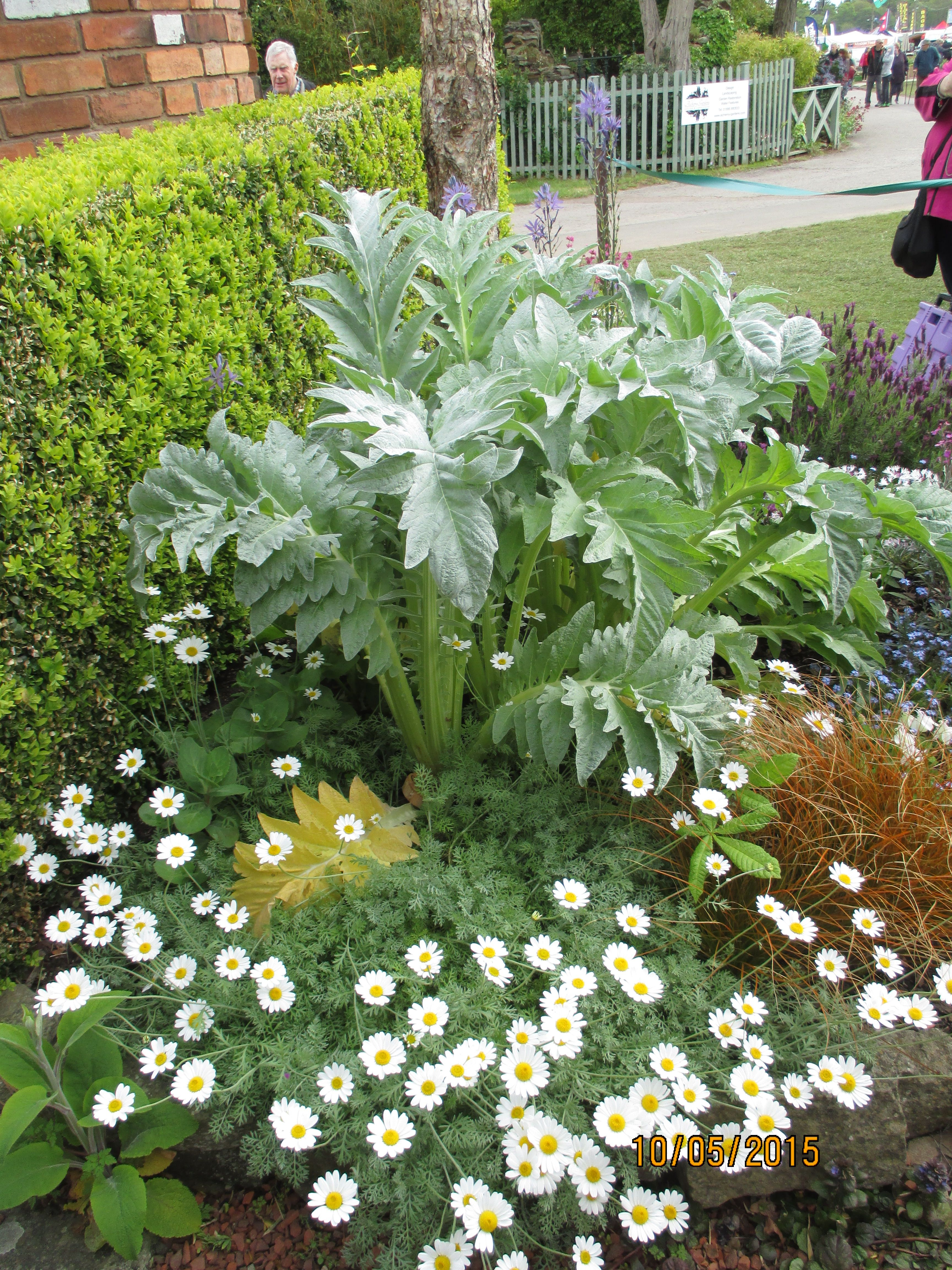 rhs malvern flower show malvern pinterest garden ideas and