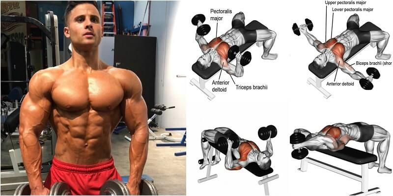 Dumbbell Exercises For Chest Muscles Target The Inner Outer Lower And Upper Pectoral 1 Bench Press 2 Neutral Grip 3 Incline