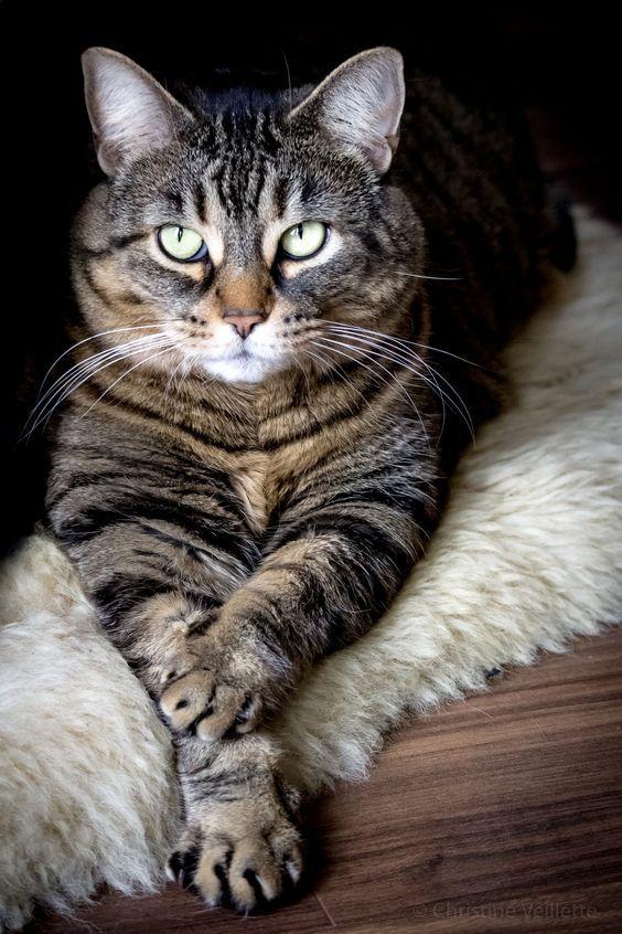 Tabby Cat Stats