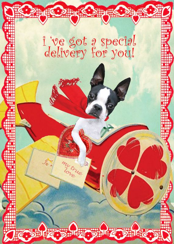 Boston Terrier Valentineu0027s Day Card Collection By Onesmalldog