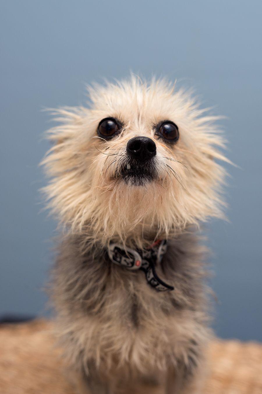 Rscpa Queensland Bones Animals Dog Pin Rescue Dogs