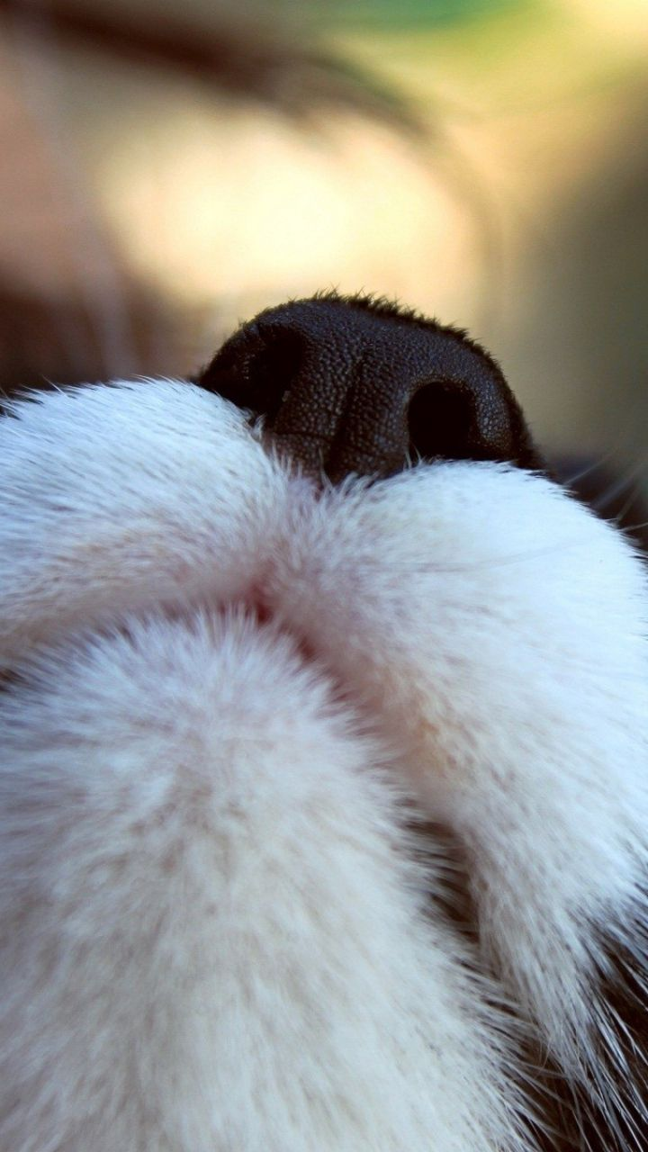 720x1280 Wallpaper Cat Nose Black White