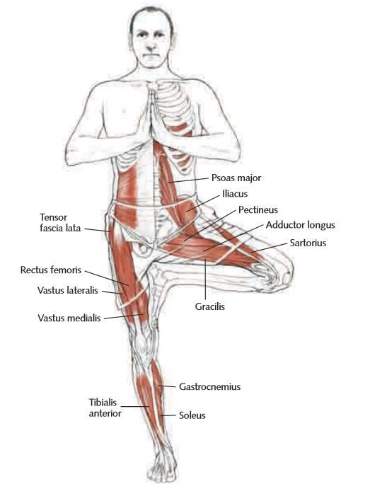 tree pose | Yoga Anatomy | Pinterest | Yoga, Yoga tree pose and Yoga ...