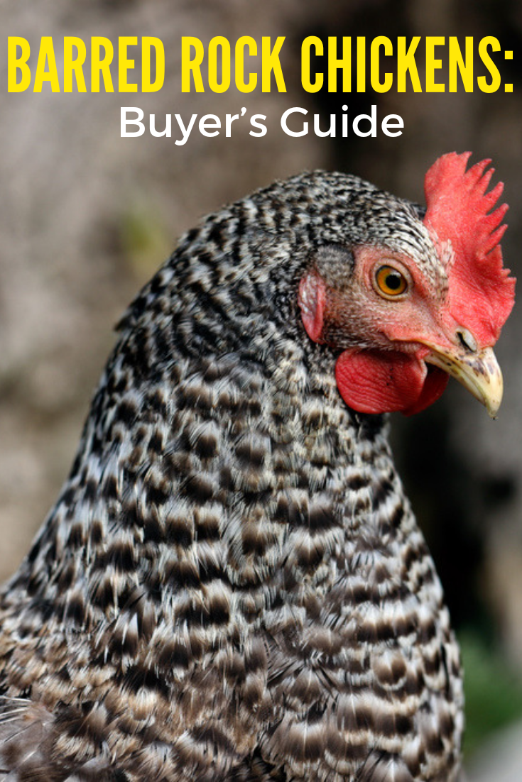 Complete Chicken Feed Guide Chicken Feed Chickens Backyard