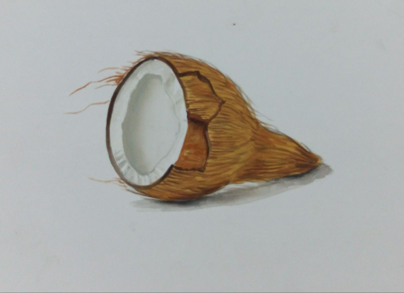 Object Drawing Half Coconut Painted Using Poster Colours Live