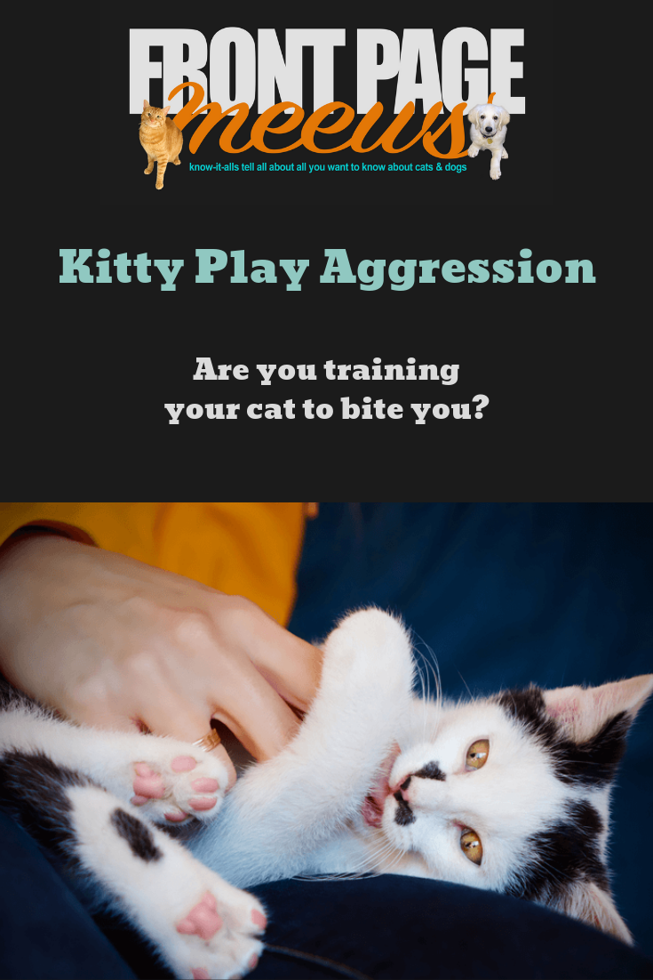 What Is Play Aggression How You Re Training Your Cat To Bite You Front Page Meews Catgenie Cat Behavior Cats What Is Play