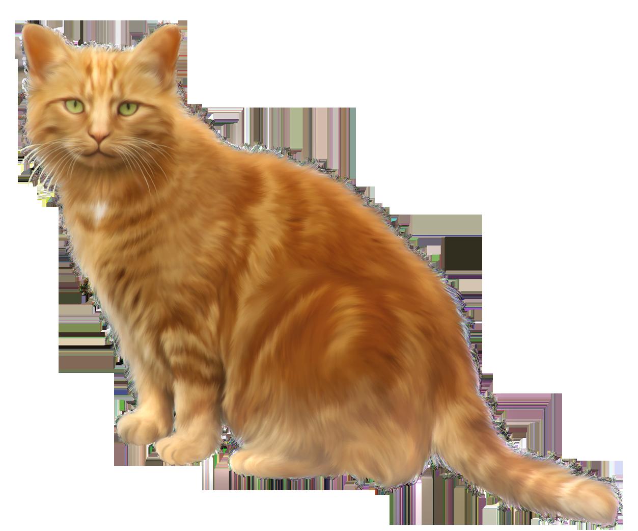 Orange Cat Transparent Png Clipart In 2020 Orange Cat Cat Clipart Cats