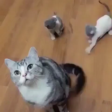 Kittens Playing With Mom's Tail