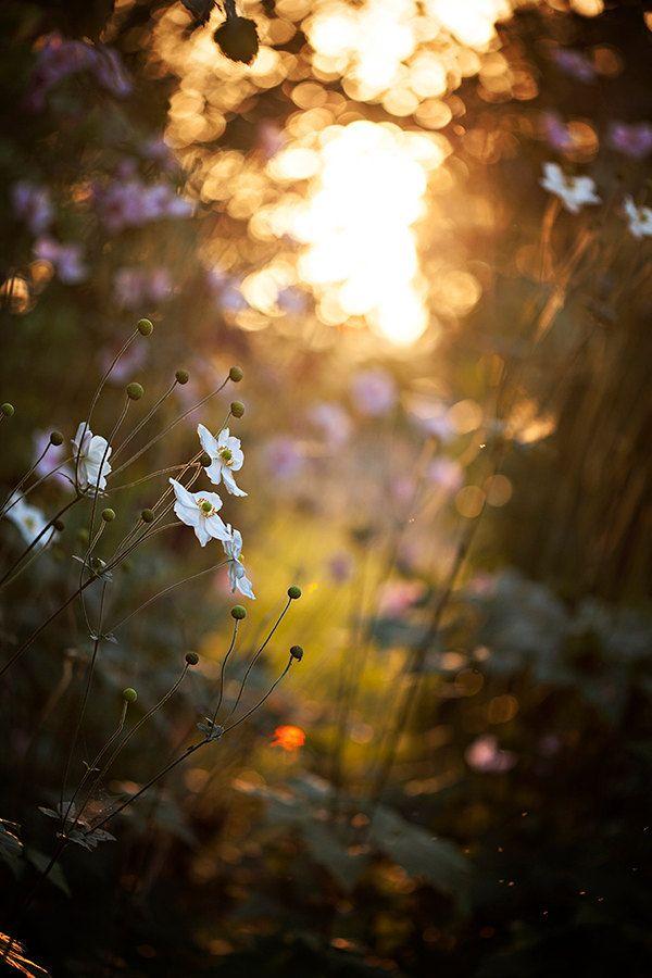 Sunset, Garden, flowers, Floral, Gift Idea, Home Decor, Fine Art Photography Image