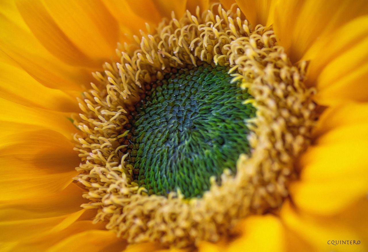 "euph0r14: "" macro | ""Fall Wreath"" | by chefcq | http://ift.tt/29hUHGY """