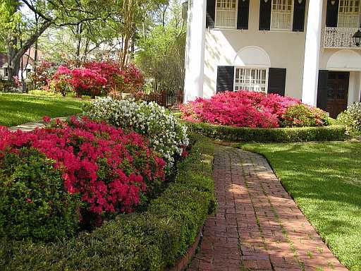 Landscaping Ideas East : Plants for east texas gardening inspiration