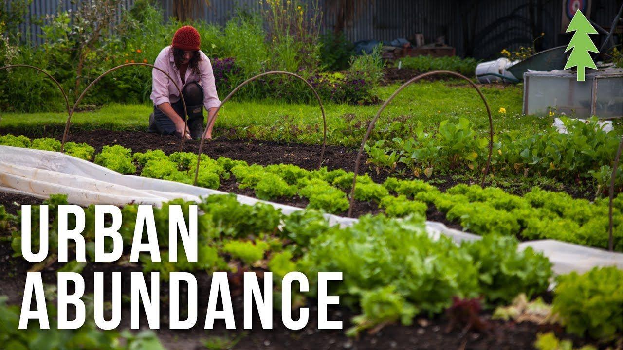 Organic Urban Farming on a 1/2-Acre Property - Urban ...